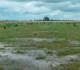 Efecto de las lluvias en los cultivos de invierno podría aumentar área de soja 17/18